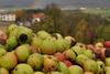 BILD: Obstklauben im Oktober für den Schulapfelsaft