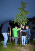 Baumpflanzung vor der NNöMS Seitenstetten
