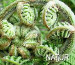 """Bildlink zur Unterseite """"WPF Natur"""""""